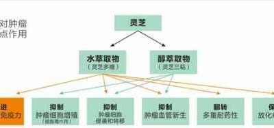 se94es.com 小峰hinata 灵芝孢子粉的功效与作用