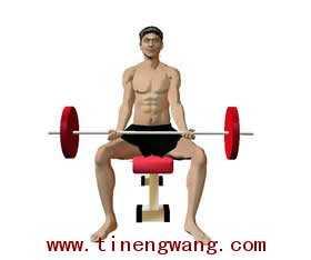 力量训练弯举动作的解剖图 持哑铃弯举运动解剖