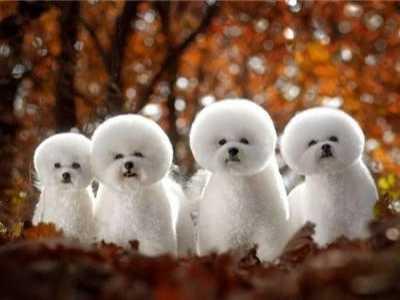 十二星座最适合养什幺品种的狗狗 狗狗星座和性格