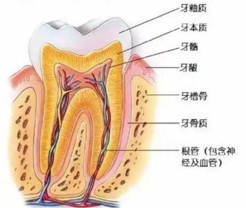 靠的是这个神秘物质 保持牙齿坚硬