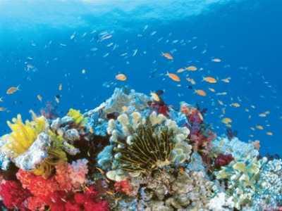大堡礁旅游几月份去最好 旅游澳洲大堡礁