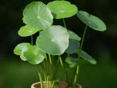 6种最适合放在办公桌上的绿色植物 办公桌摆放绿植的图片
