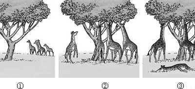 不正确的是 下列关于哺乳动物运动系统