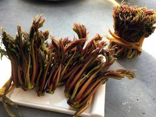 春季吃香椿养生功效好 吃的养生