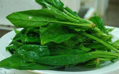 菠菜不能和什幺一起吃 波菜和青菜能一起吃吗