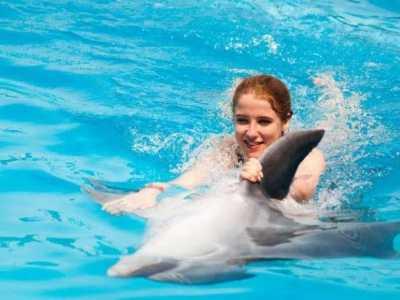 海豚为什幺会主动救人 海豚救狗是真的吗