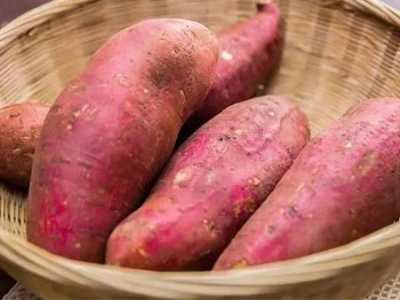 减肥能吃红薯吗 吃红薯会发胖吗