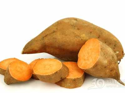 糖尿病人能吃红薯吗 甘薯糖尿病人可以吃吗