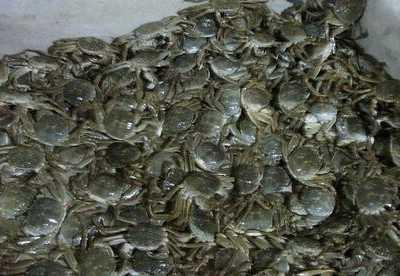 螃蟹吃什幺食物长的快 螃蟹属于什幺动物