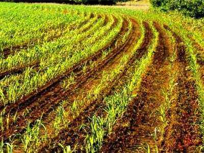 一亩地是多少平方米 亩和平方千米的换算