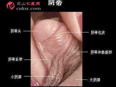 成熟女性阴蒂勃起时的阴核实图照片 女人下阴部图片