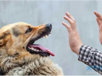 女人梦见狗咬手啥意思 周公解梦狗咬手