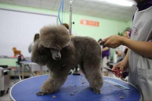 哈尔滨想学专业的宠物美容去哪里好 哈尔滨学美容